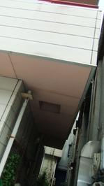 25軒天塗装前.JPGのサムネール画像