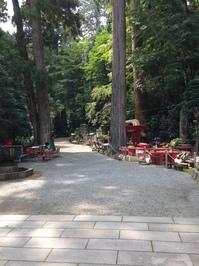 14杉林を奥社に.JPGのサムネール画像