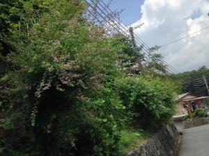 21萩1.JPGのサムネール画像
