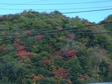 香貫山の紅葉.JPG