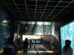 水族館1.jpeg