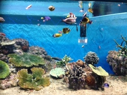 水族館3.jpeg