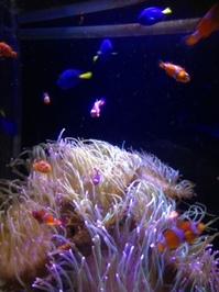 水族館4.jpeg