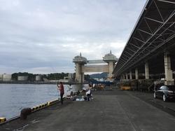 写真7魚市場からビュウオ.JPG