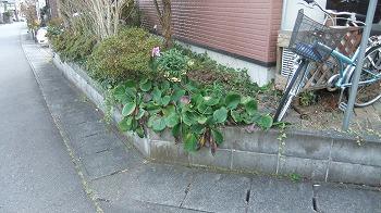 道路脇の花壇
