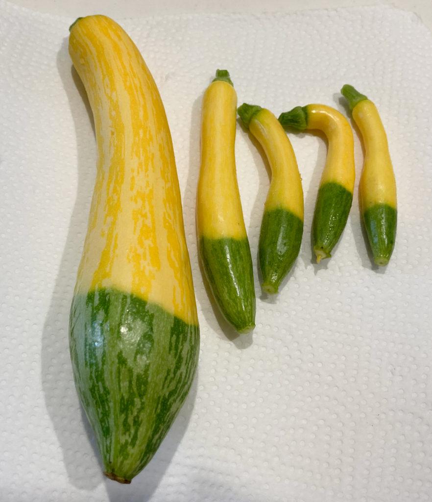 今夏の収穫